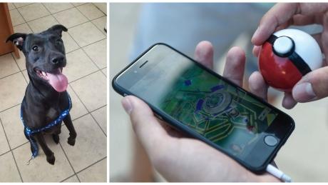 pokemon go animal shelter