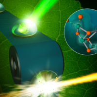 X-ray laser spots photosynthesis in real-life conditions