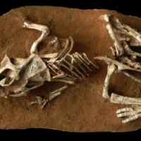Dinosaur eggs took longer to hatch than previously thought
