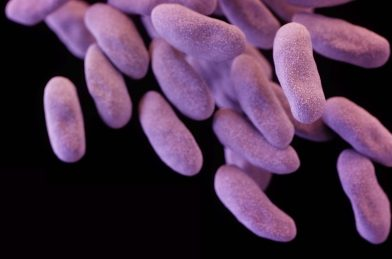 WHO's 'priority pathogens' list highlights urgent need for new drugs