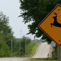 Going on a road trip? Study shows how to reduce roadkill