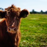 How Developments in Technology Could Form a Better World for Animals